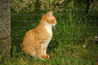 katzenklappe einbauen