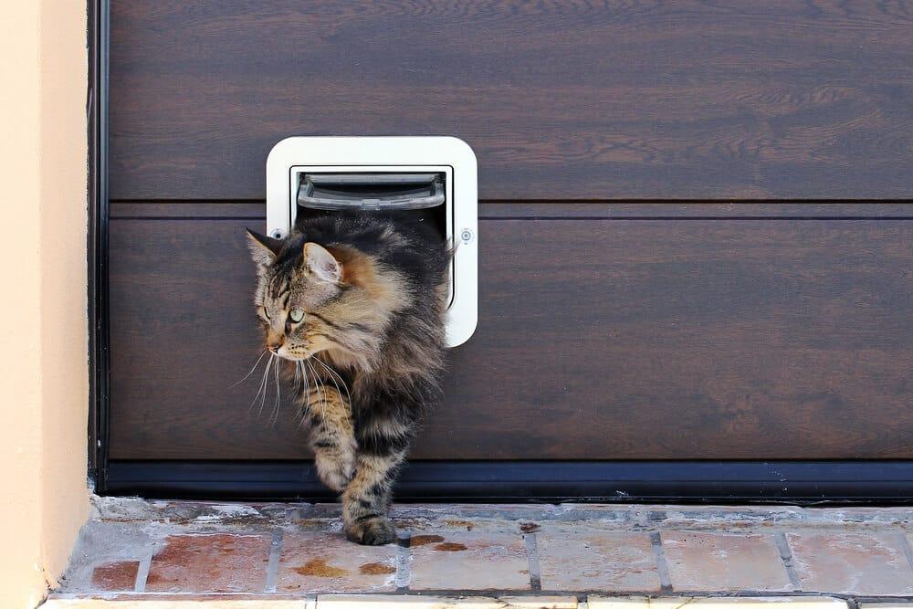 Katze mit Freilauftür