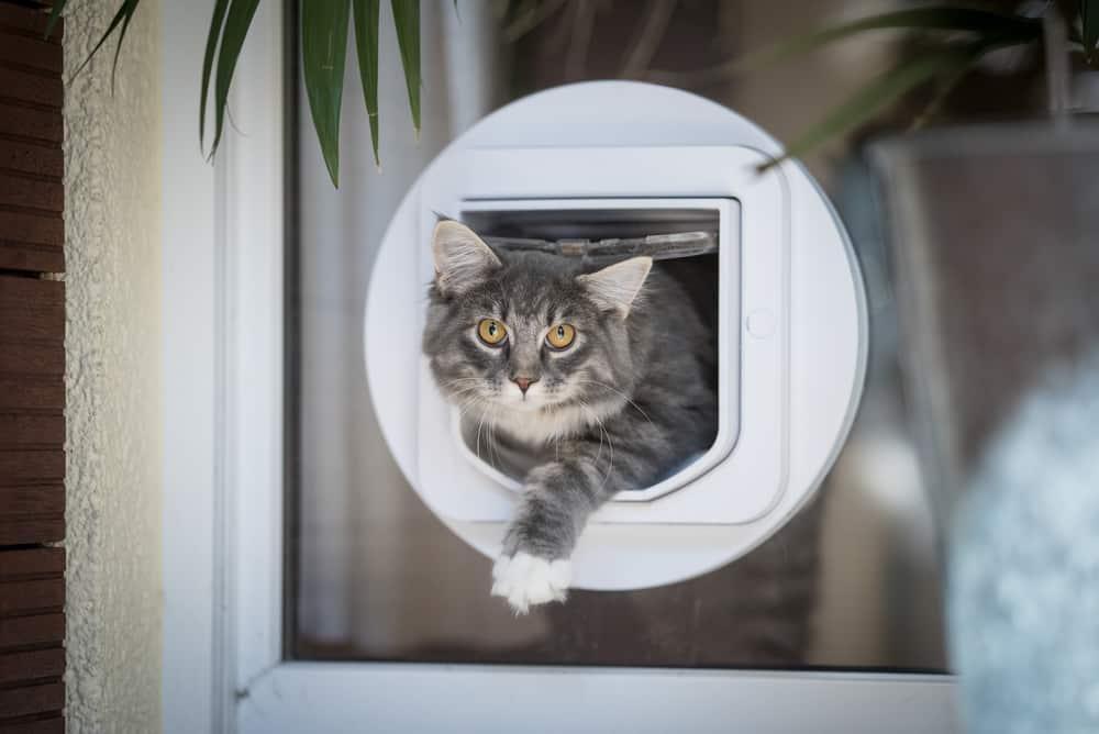Katze kommt durch Katzenklappe mit Chip